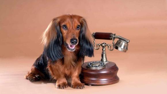Telecomaanbieder Simpel introduceert belabonnementen voor huisdieren